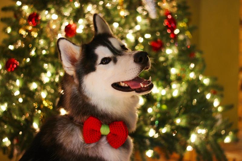 HOTM Chat: December - waiting for Santa Img_2212