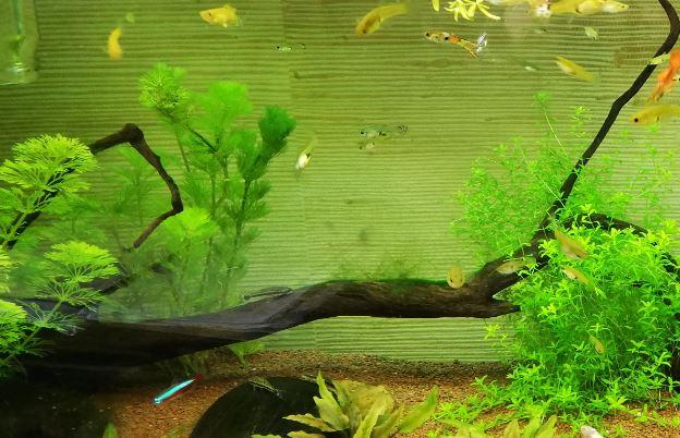 Comment nettoyer une racinen, in situ !.. Algues10