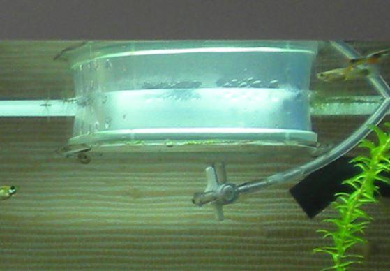 Paramètres de l'eau complètement modifiés Cloche10