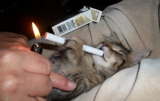 Funny Cat Picture Thread! Smokin10