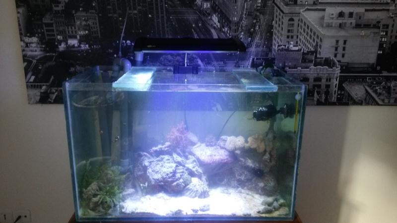 """160 litres spécial hippocampe """"recifalettearras"""" - Page 3 20130810"""