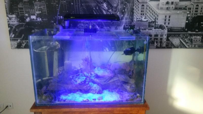 """160 litres spécial hippocampe """"recifalettearras"""" - Page 3 20130811"""