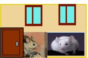 Une souris grise et une souris blanche  2018-141