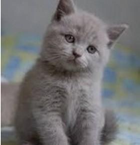 Le petit chat gris  2019-132
