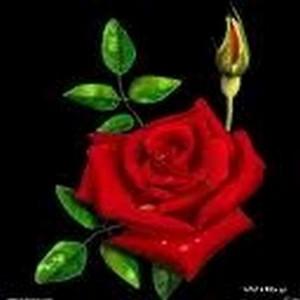 Au petit  jardin des roses Fleur-12