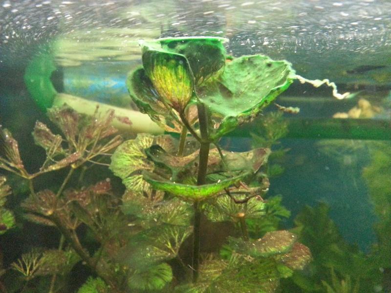 Problèmes d'algues 20130310