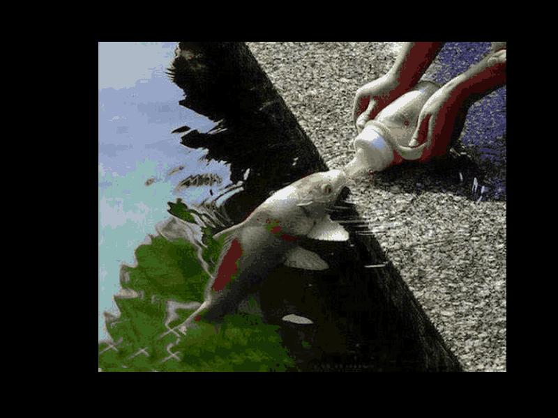 Photos Animaux Sympas ou Rigolotes - Page 5 Viewer11