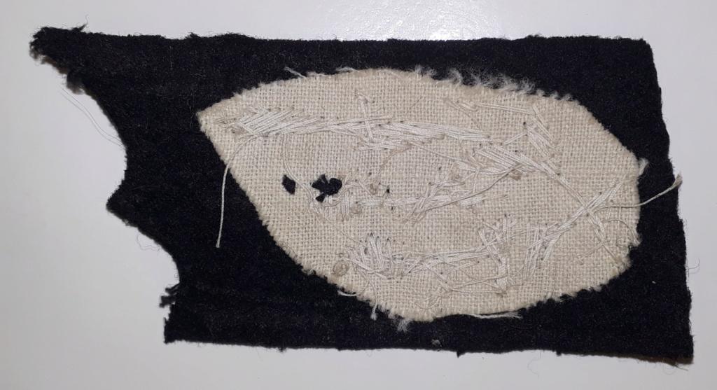 patte col noire à identifier 20191156