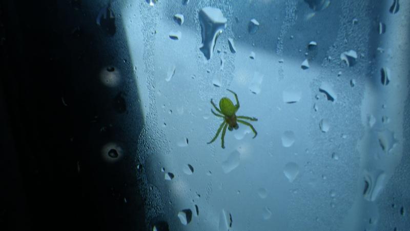 jolies araignées Imgp1411