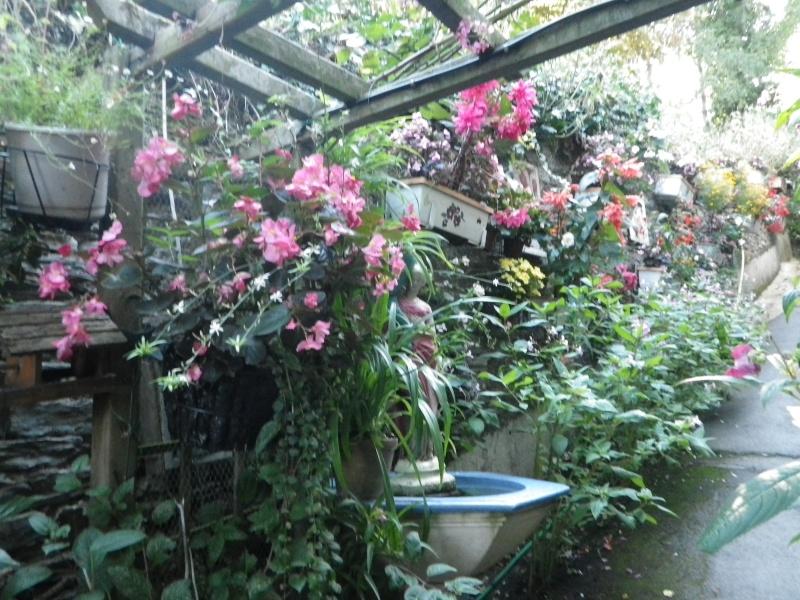à la gacilly, la venelle fleurie Imgp2420
