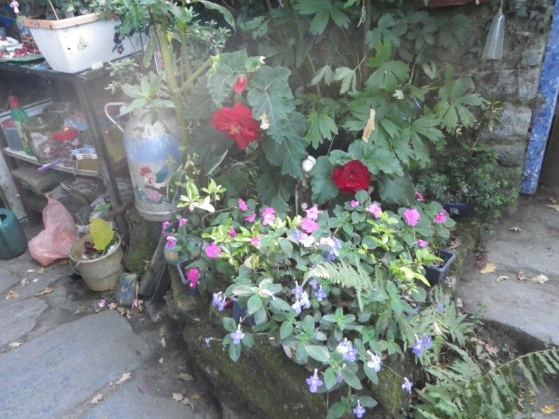 à la gacilly, la venelle fleurie Imgp2421