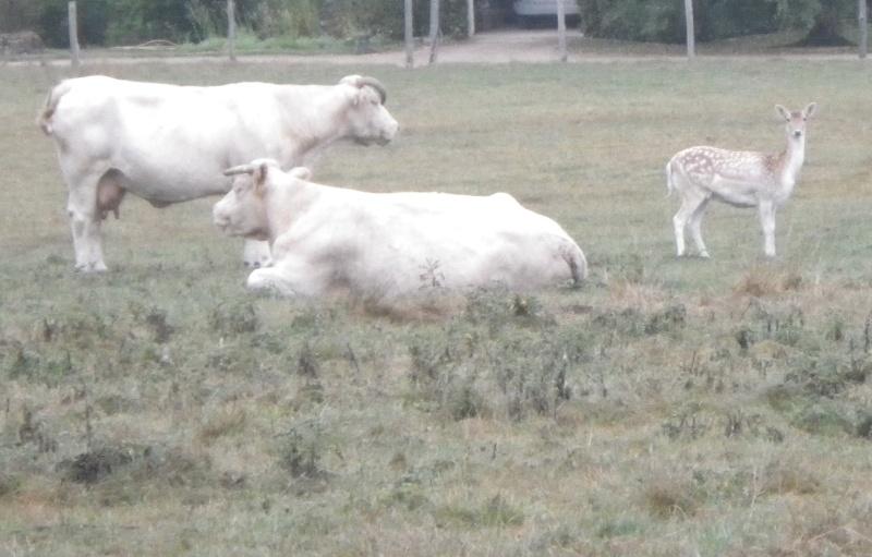 une habituée du troupeau Imgp2910