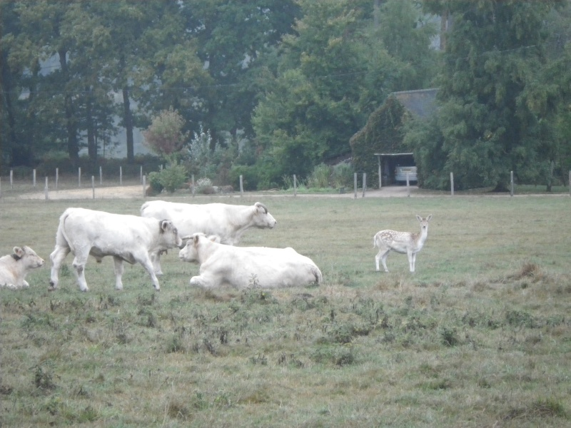 une habituée du troupeau Imgp2911