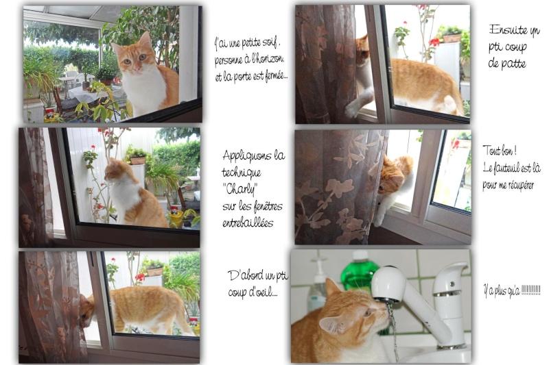 Mon petit Charly est arrivé - Page 4 Charly10