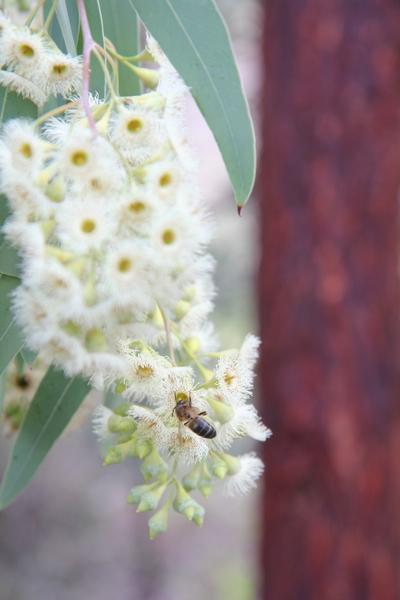 abeilles - Page 2 Abeill10