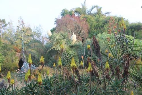 Pierre - Jardin d'acclimatation privé : l'Oasis (66) - Page 36 Aloe_s12