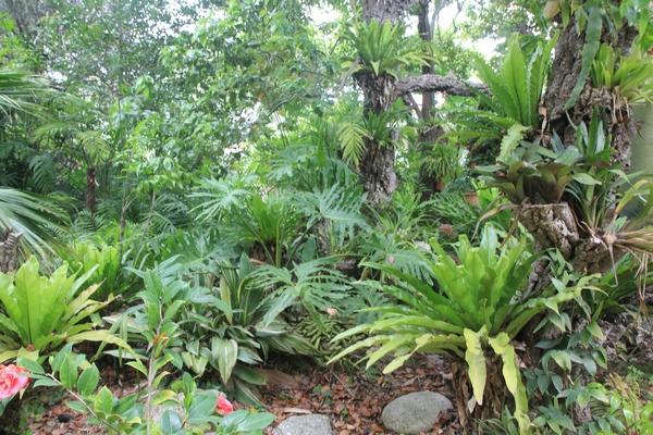 Pierre - Jardin d'acclimatation privé : l'Oasis (66) - Page 30 Asplen15