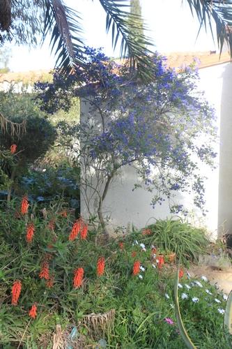 Pierre - Jardin d'acclimatation privé : l'Oasis (66) - Page 33 Ceanot11
