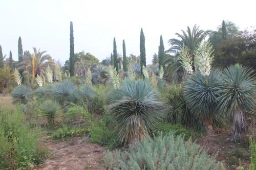 Pierre - Jardin d'acclimatation privé : l'Oasis (66) - Page 36 Fleurs10
