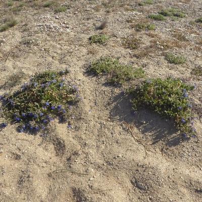 Hallophytes Hallop11