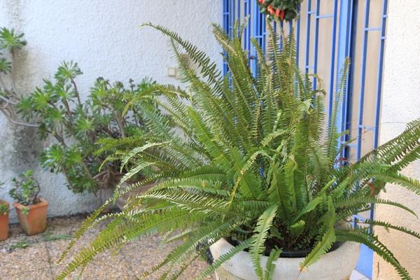 Jardin d'acclimatation privé : l'Oasis (66) - Page 27 Nephro10