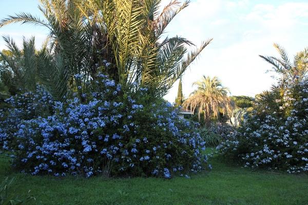 Pierre - Jardin d'acclimatation privé : l'Oasis (66) - Page 39 Plumba11