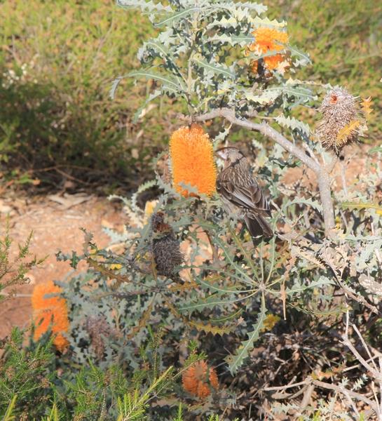Quelques beautés d'Australie Occidentale. Wa_ban10