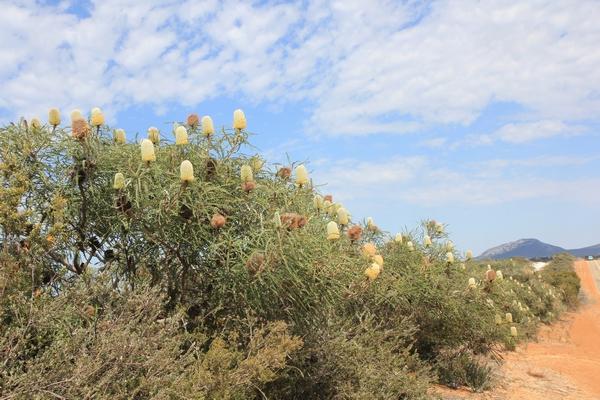 Quelques beautés d'Australie Occidentale. Wa_ban12