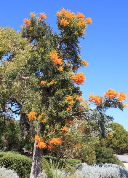 Quelques beautés d'Australie Occidentale. Wa_nuy10