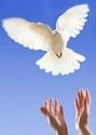 le temps n'Efface rien..... Juste le moment présent aide à vivre mieux Luna tu auras 3 ans d'ailes d'ange cet année le 17 mai 2013 je cite ton histoire qu'elle reste à jamais Colomb10