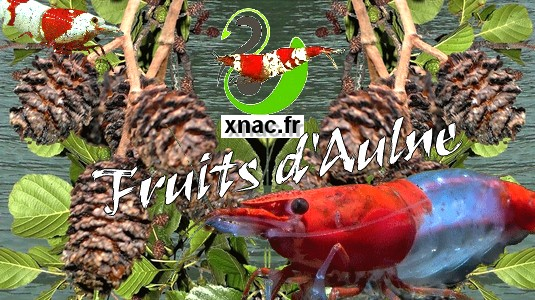 [XNAC] Fruits d'Aulne Fruit_10