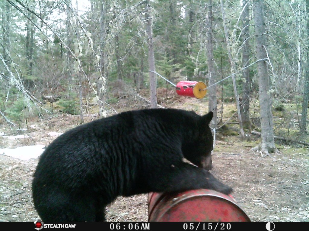 chasse a l'ours 2020 Stc_0014