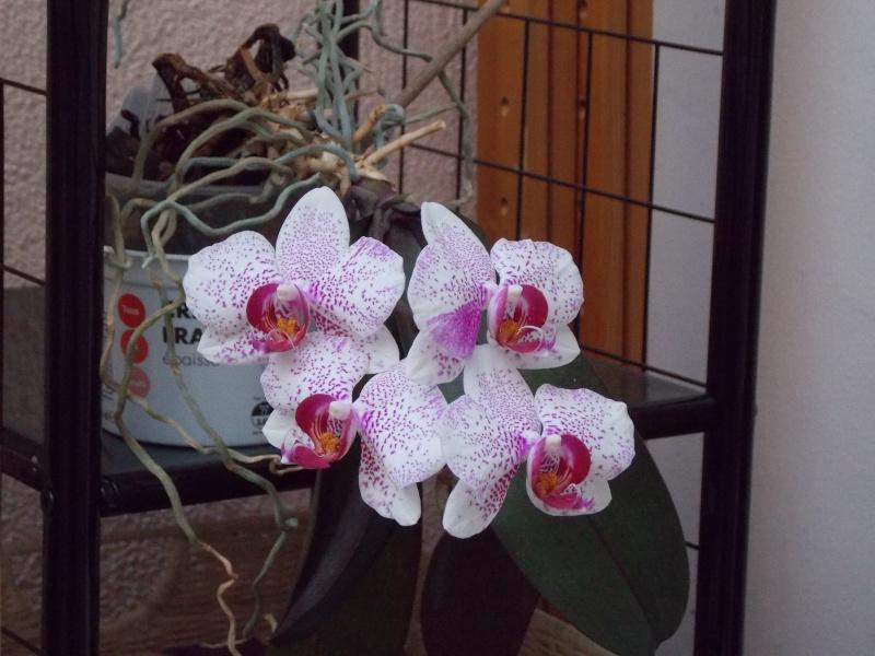 Mes orchidées 02111