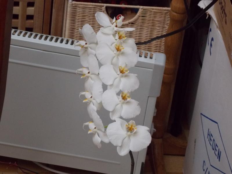 Mes orchidées 02211