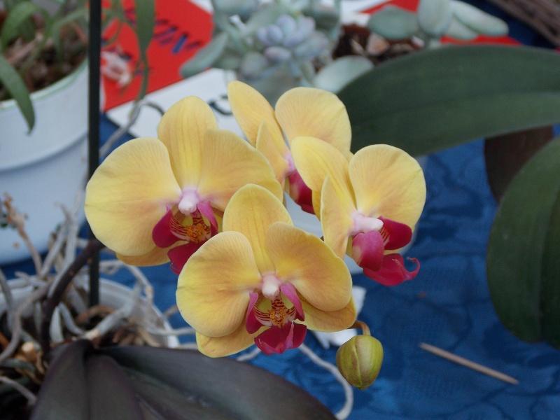 Mes orchidées 02510
