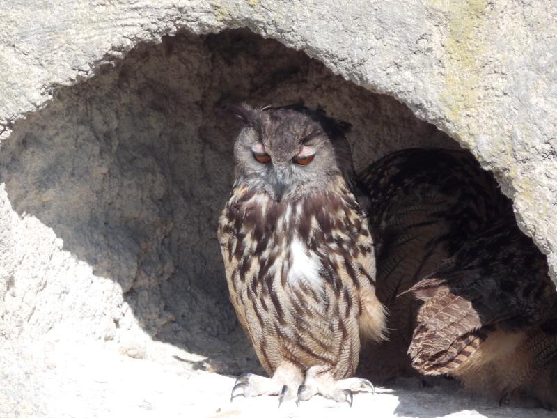 Oiseaux de Camargue 04610