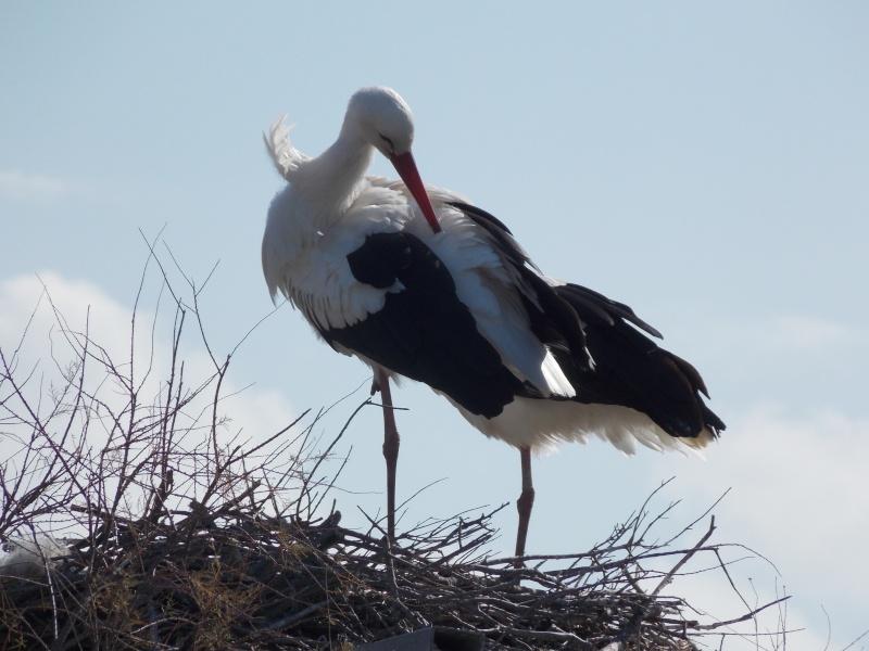 Oiseaux de Camargue 04810