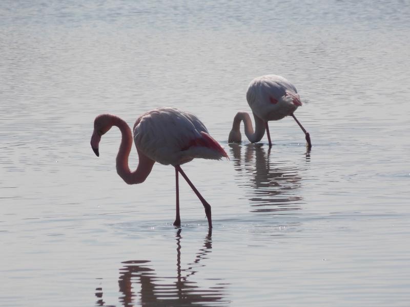 Oiseaux de Camargue 05310