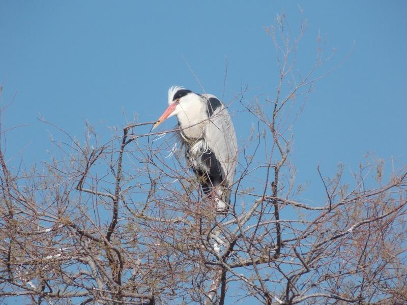 Oiseaux de Camargue 05910