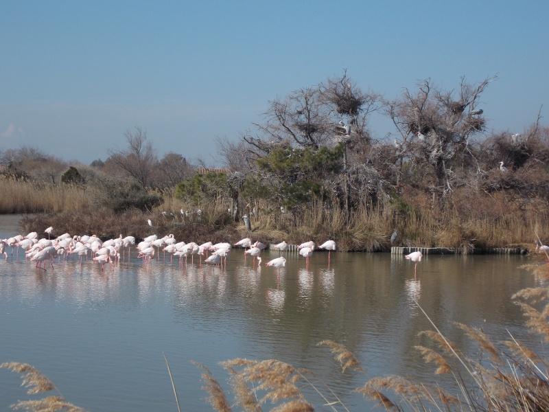 Oiseaux de Camargue 07210