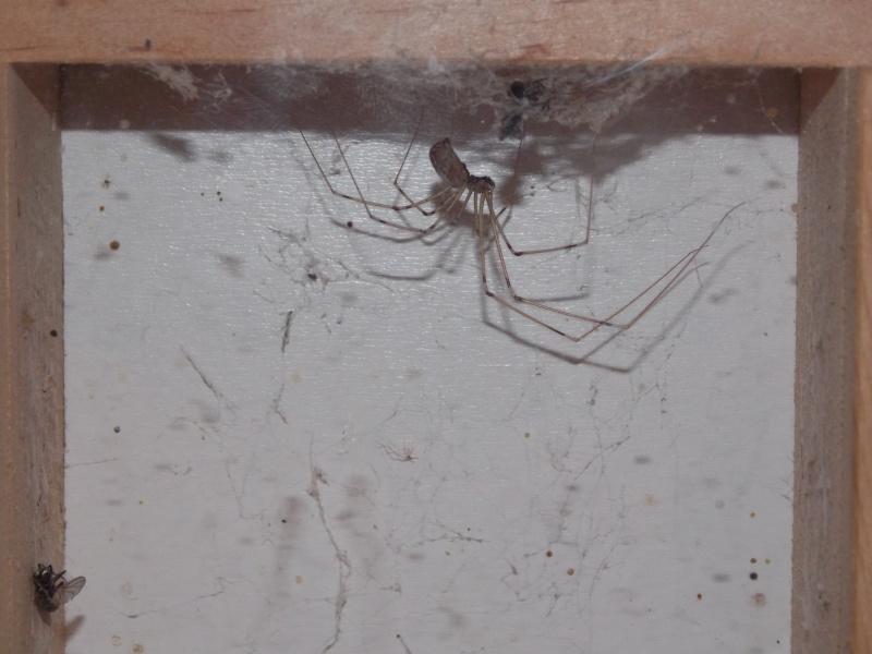 L'animal le plus facile à élever du monde: l'araignée de Pluche 07710