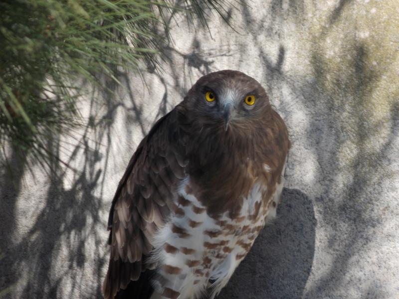 Oiseaux de Camargue 08710