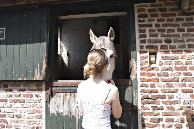 8 ans d'équitation..♥ - Page 4 _mg_5513
