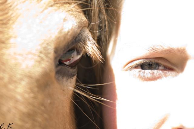 8 ans d'équitation..♥ - Page 4 _mg_5515