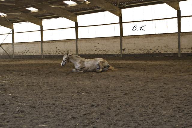 8 ans d'équitation..♥ - Page 4 _mg_5516