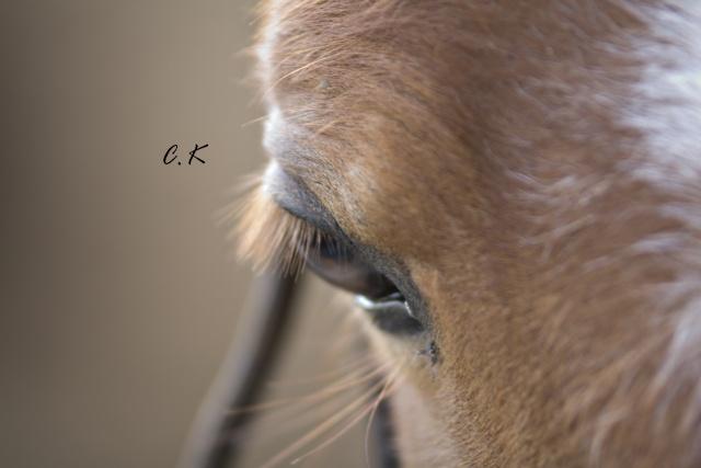 8 ans d'équitation..♥ - Page 4 _mg_5519