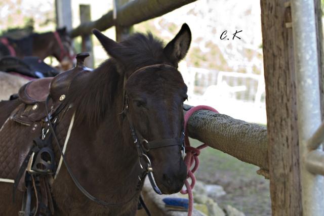 8 ans d'équitation..♥ - Page 4 _mg_5521