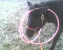 8 ans d'équitation..♥ - Page 4 Img00610