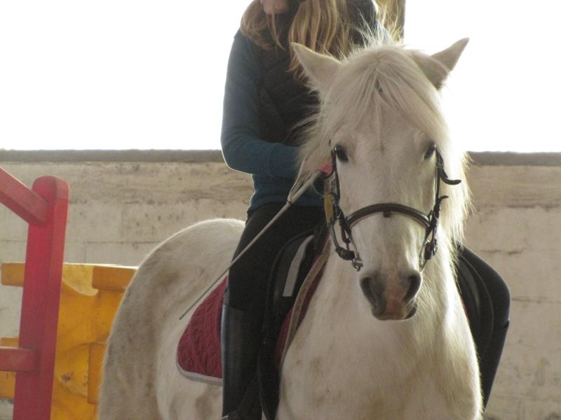 8 ans d'équitation..♥ - Page 2 Img_7912