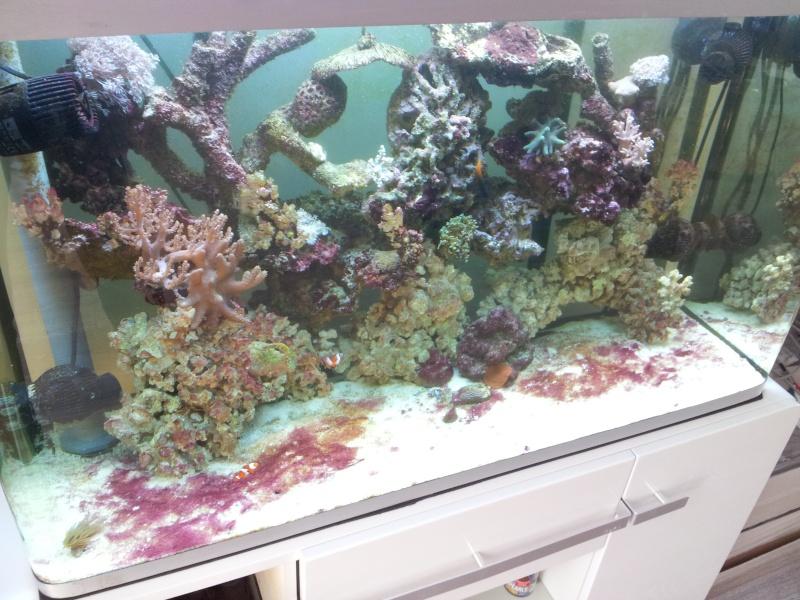 Aquarium de Samix  - Page 2 20130815